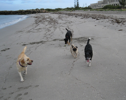 Dogs at North Coogee